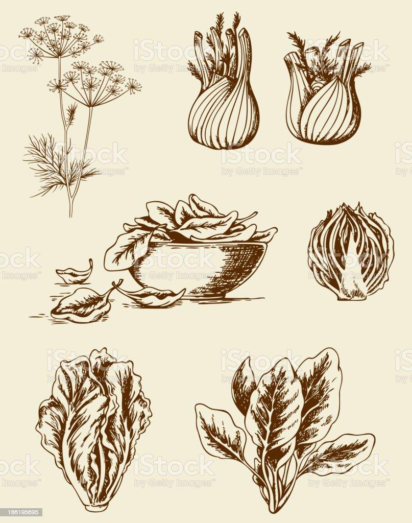 Vintage vegetables vector art illustration