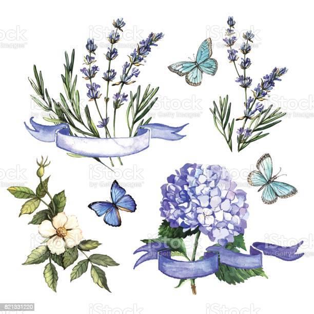 Vintage watercolor decorative set with flowers and ribbons vector id821331220?b=1&k=6&m=821331220&s=612x612&h=im6039nwb6de9ks6tke0n6qlqbyako9 eyn7rhfdk5q=