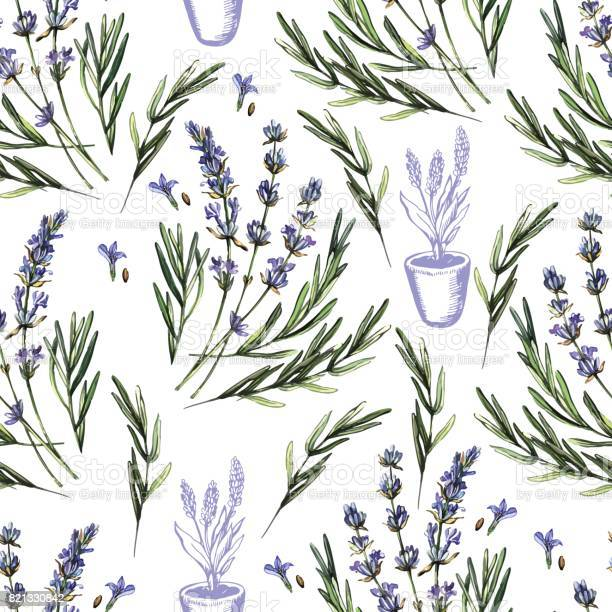 Vintage watercolor pattern with lavender vector id821330842?b=1&k=6&m=821330842&s=612x612&h=a1th9iytkbixvtaptpn9cesdmi ranls95s8tr4xvay=
