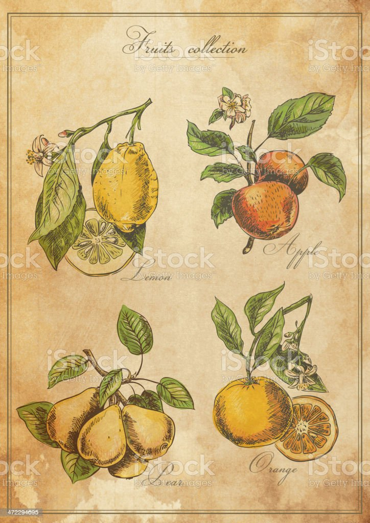Vintage, weathered poster displaying four types of fruit royalty-free stock vector art