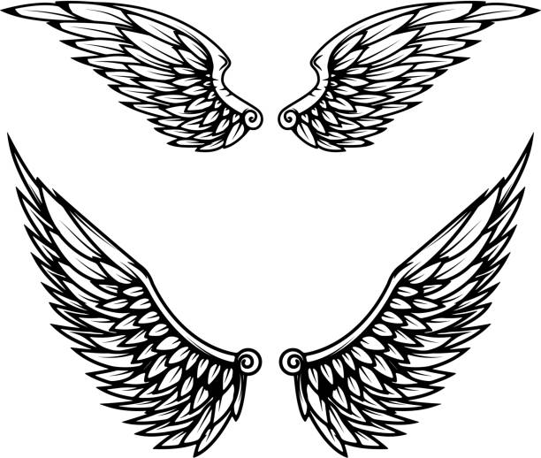 Vintage wings isolated on white background. vector art illustration