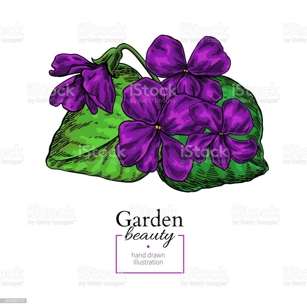 Fleur Violette De Dessin Main De Vecteur Dessine Bouquet Floral