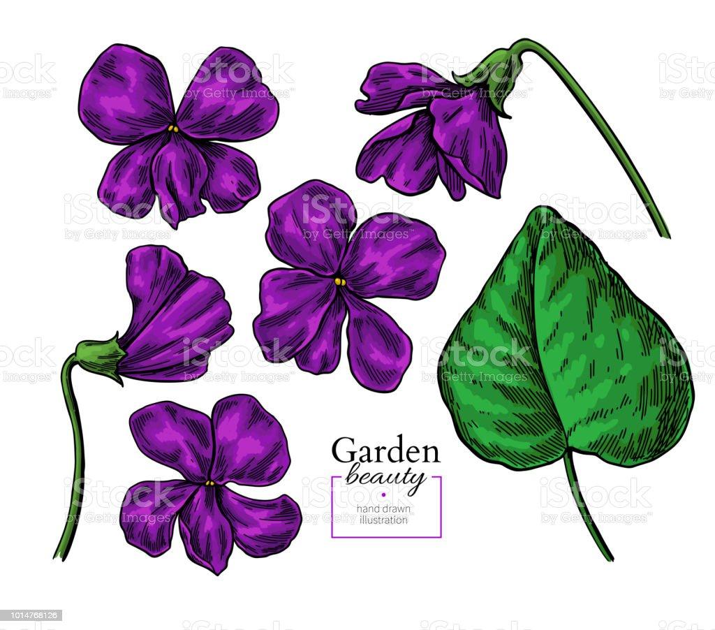 Fleur Violette De Dessin Set De Floral Vector Dessines A La Main