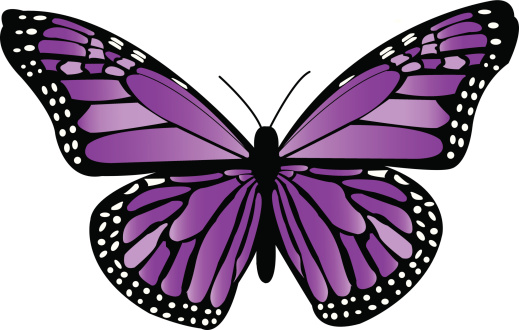 Violet Monarch Butterfly
