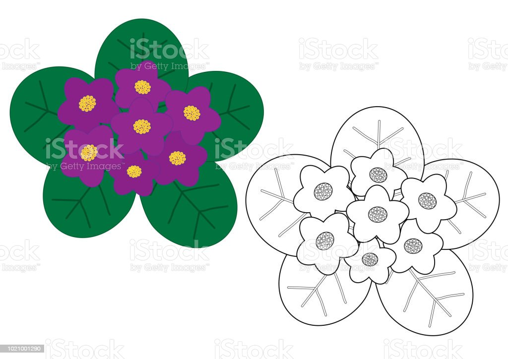 Violets Flowers Colorful And In White Black Colors Coloring Page Royalty Free