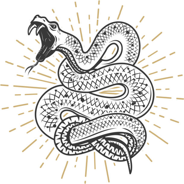 Viper snake illustration on white background. Design element for poster, emblem, sign. Vector illustration vector art illustration