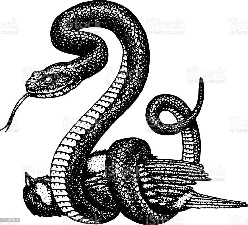 Ilustración de Serpiente Víbora Serpiente Cobra Y Pitón Anaconda O ...