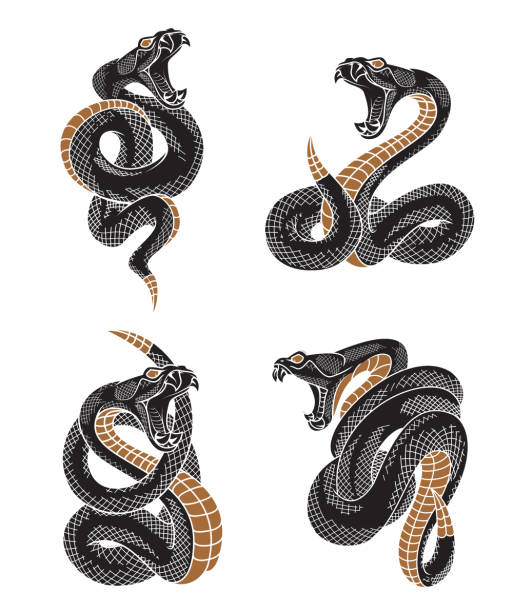 viper snake set. - snakes tattoos stock illustrations, clip art, cartoons, & icons
