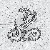Viper snake.