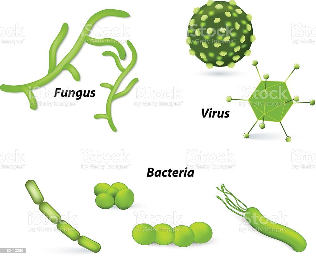 Virus, bacteria and fungi vector art illustration