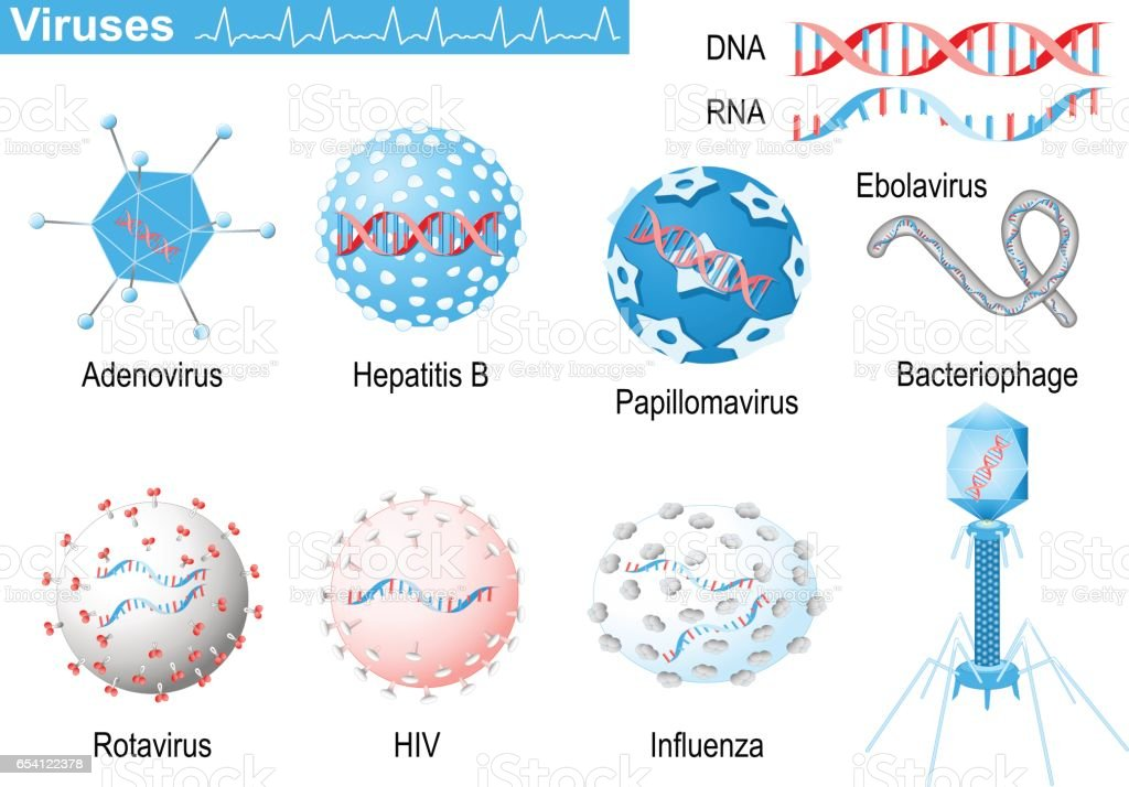 Viruses. RNA and DNA. Medical Infographic set with icons of viruses. vector art illustration