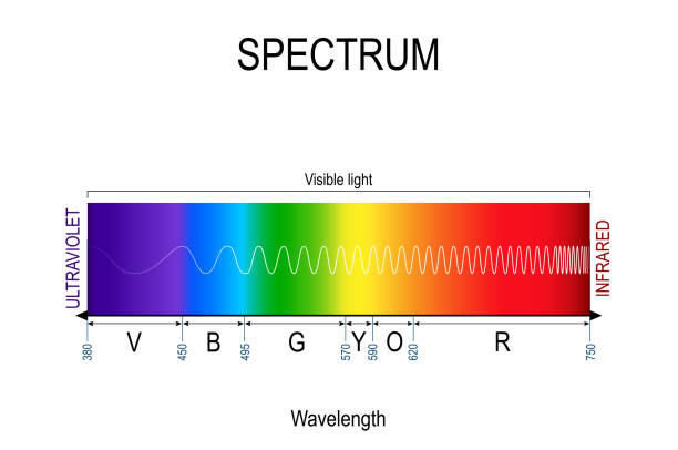 Visible spectrum color. infographic of sunlight color Visible spectrum color. infographic of sunlight color. In order of increasing frequency and decreasing wavelength. Range of spectrum from 350 to 750 nanometer. Vector illustration for educational, medical and science use. infrared stock illustrations