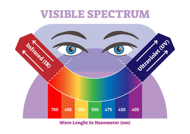 Visible spectrum vector illustration diagram, color scheme from infrared to ultraviolet color scale. Visible spectrum vector illustration diagram, color scheme from infrared to ultraviolet color scale. Science and educational information. infrared stock illustrations