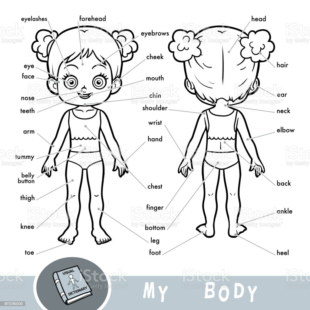 Visual Dictionary For Children About The Human Body My Body Parts ...