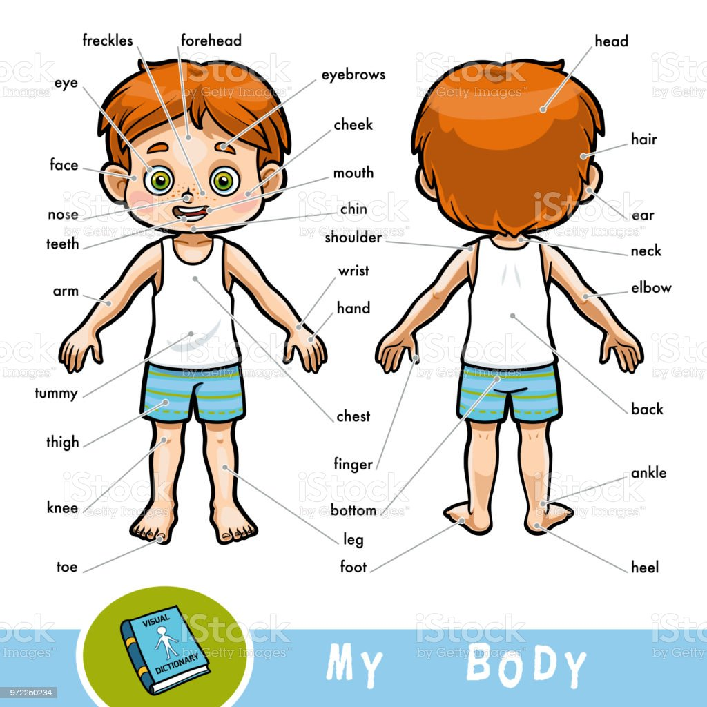 Visual Dictionary For Children About The Human Body My Body Parts