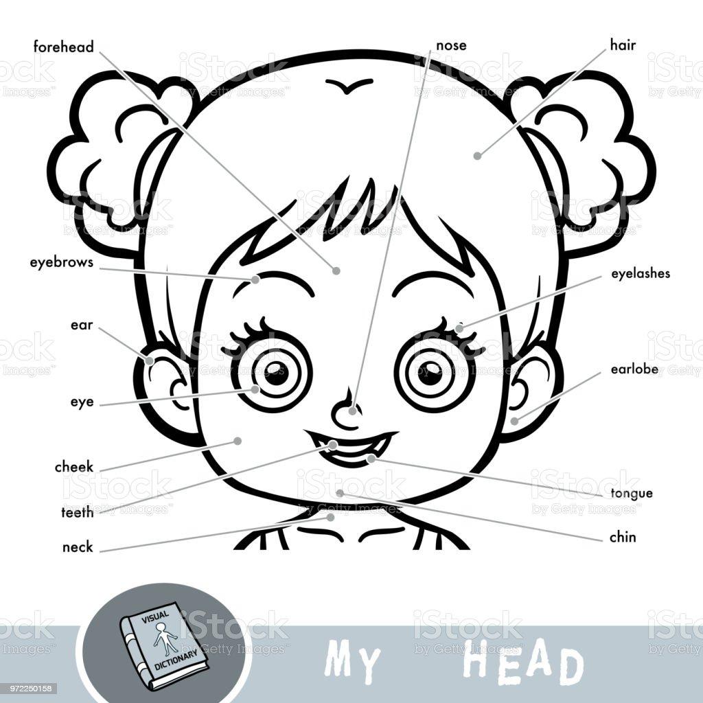 Insan Vücudu Hakkında çocuklar Için Resimli Sözlük Benim Baş