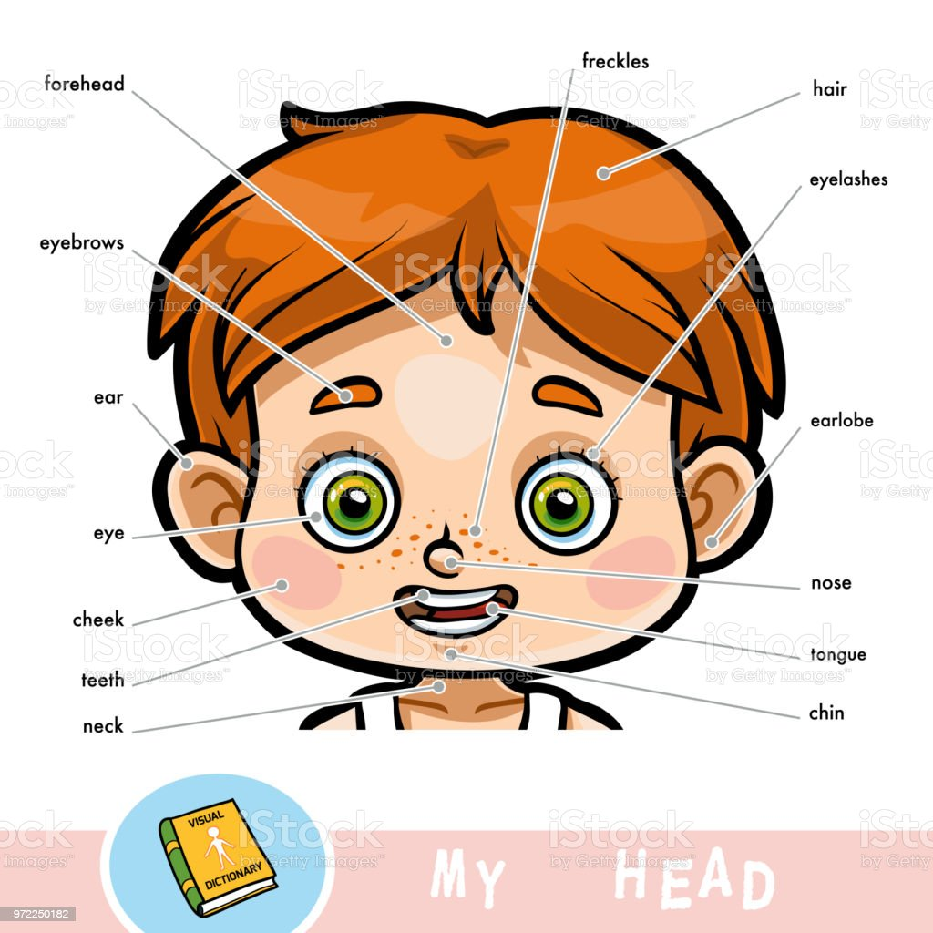 Visual Dictionary For Children About The Human Body My Head Parts