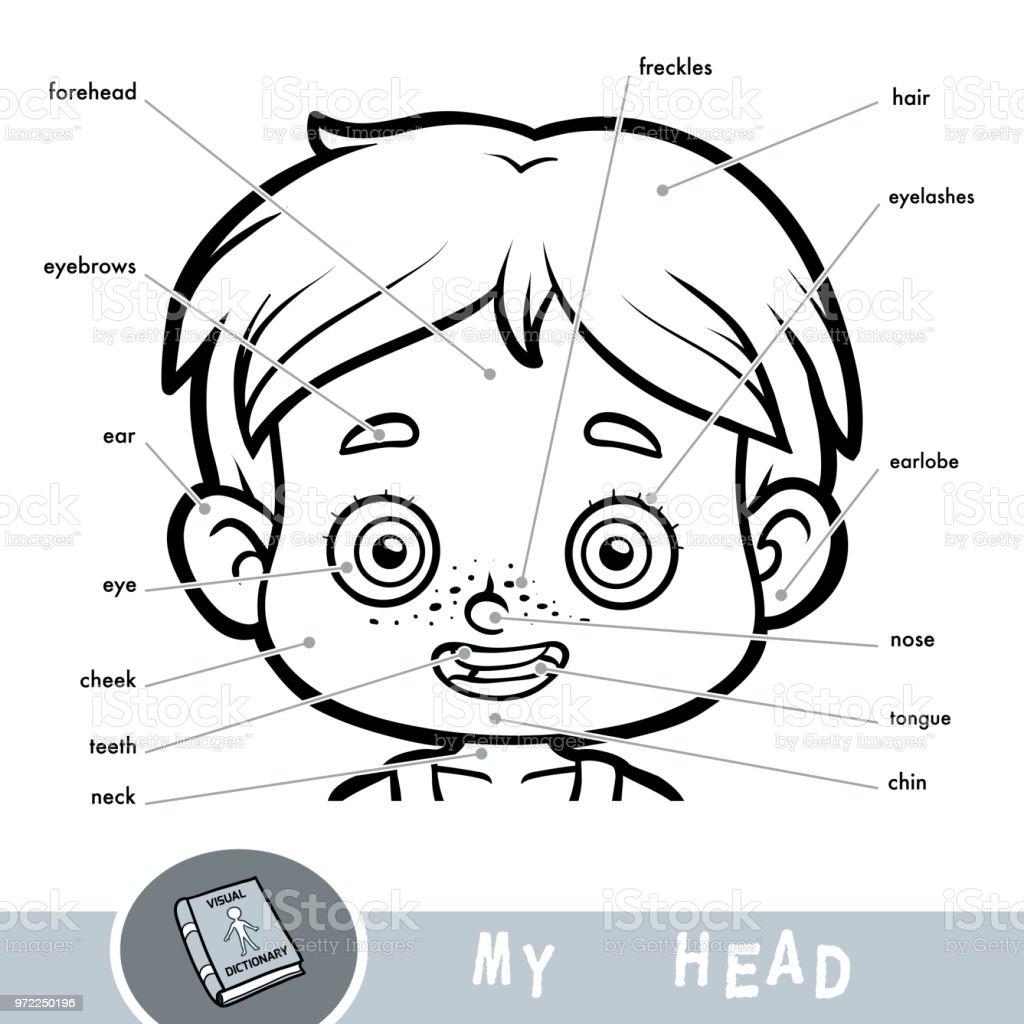 Insan Vücudu Hakkında çocuklar Için Resimli Sözlük Bir çocuk Için