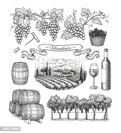Viticulture big set isolated on white background.
