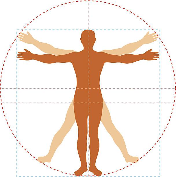 витрувианский человек - золотое сечение stock illustrations