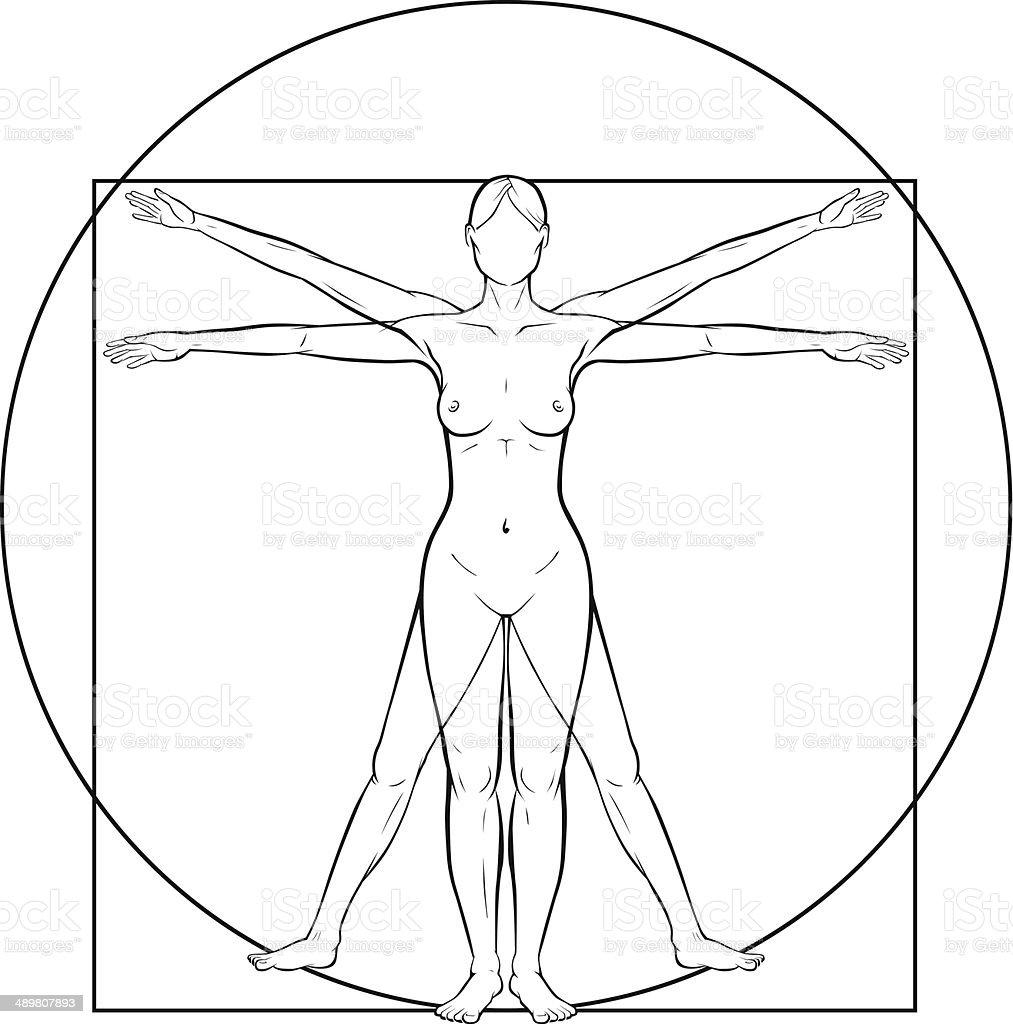 Vitruvian Woman Stock Vector Art More Images Of Anatomy 489807893
