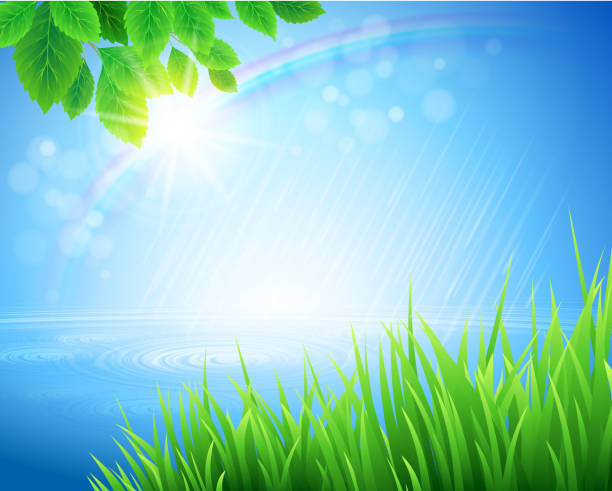 stockillustraties, clipart, cartoons en iconen met vivid spring landscape with rainbow appearing in bokeh light - grassenfamilie