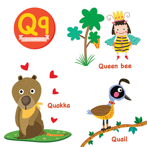 Q Vocabulary Q vocabulary cartoon set with quail, quokka and queen bee isolated on white background, illustration, vector queen bee stock illustrations