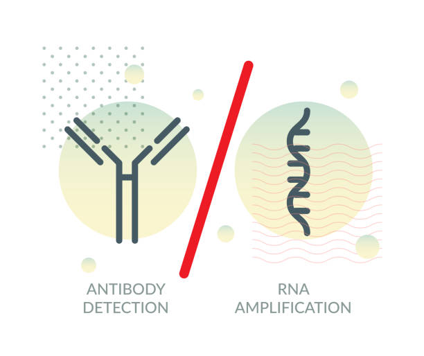 PCR Vs Serologic Testing for COVID-19 - Illustration PCR based Nasal Nasopharyngeal and Buccal Swab - Buccal Smear Testing vs Serologic  Rapid Testing for COVID-19 - Illustration  as eps 10 File. antibody stock illustrations