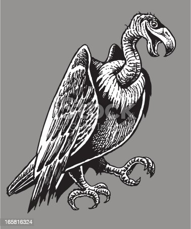 Pen and ink illustration of a vulture or buzzard. Check out my