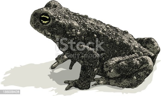 This Toad illustration is constructed from vector stroke, waiting for you to use as is, expand to a fill or convert to a brush of your choosing. Silhouette fill shapes behind. Various stoke sizes and colors are grouped separately. Easily editable.
