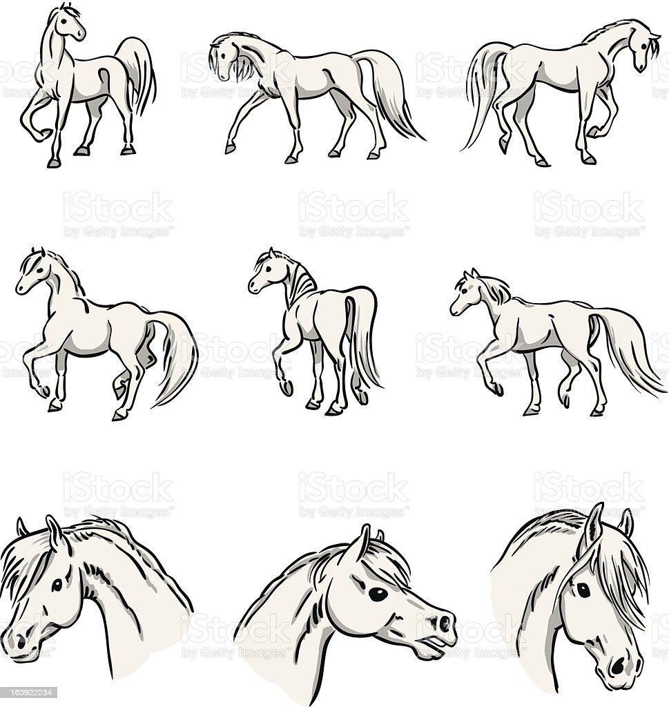 Walking Arabian Horses vector art illustration