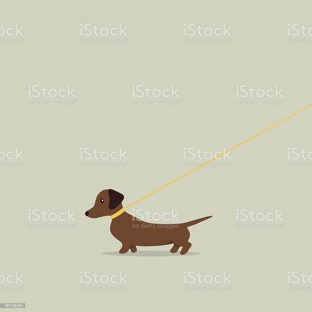 Walking dog on lead Dachshund vector art illustration