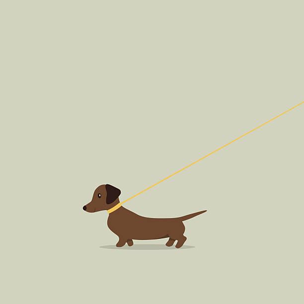 bildbanksillustrationer, clip art samt tecknat material och ikoner med walking dog on lead dachshund - tax