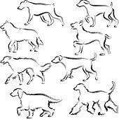 Walking dogs Hand Drawn