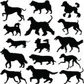 Walking dogs silhouette