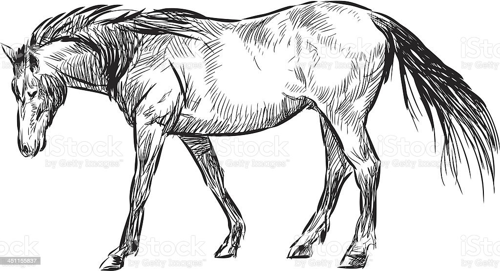 walking horse vector art illustration