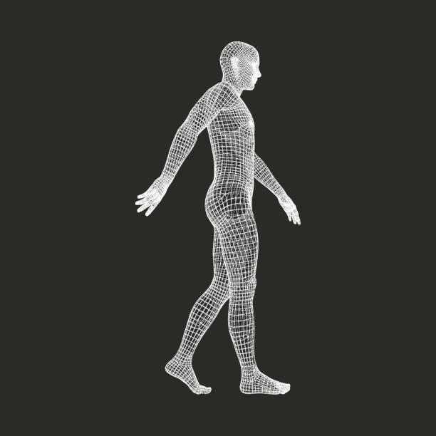 Walking Man. 3D Human Body Model. Geometric Design. Vector Illustration. vector art illustration