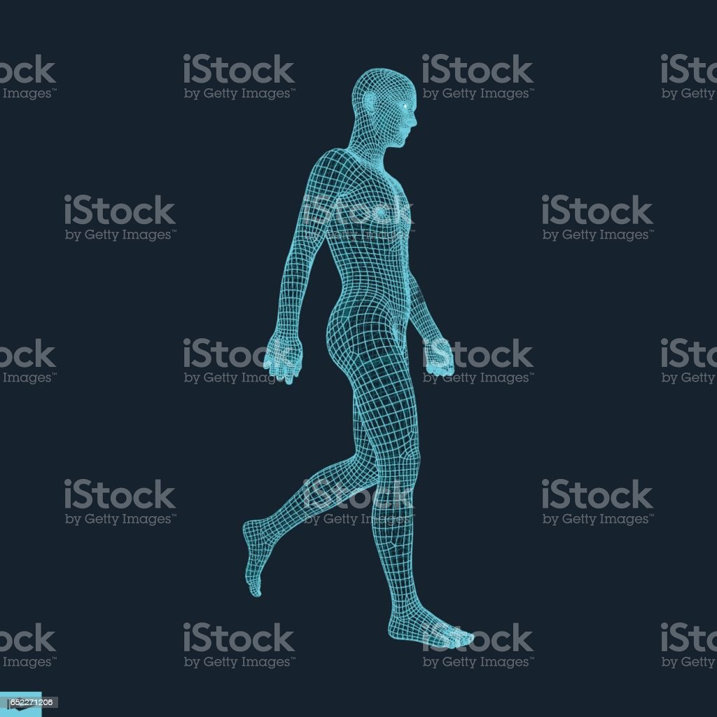 Walking Man. 3D Human Body Model. vector art illustration