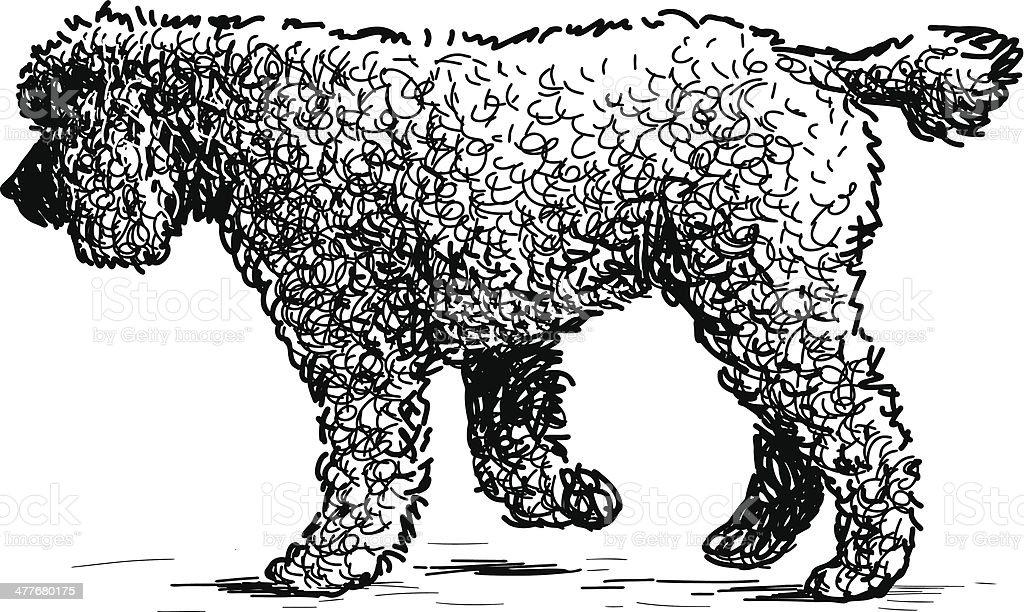 walking poodle royalty-free stock vector art