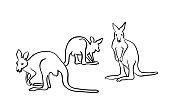 Wallaby Kangaroos