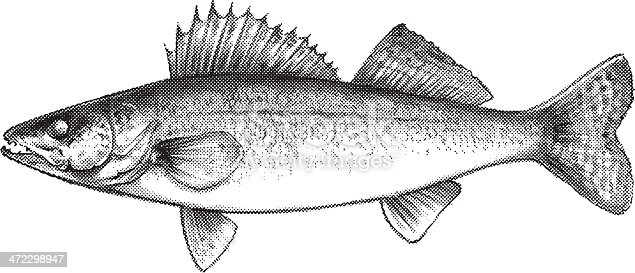 Download Pike Fish Clipart Free Download 432 Pike Fish Free Illustrations