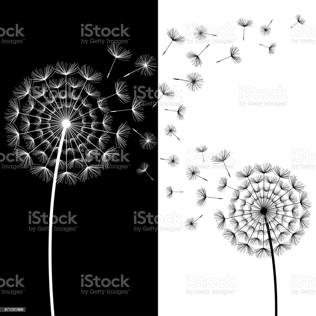 Wallpaper With Two Black And White Dandelions Blowing Royalty Free