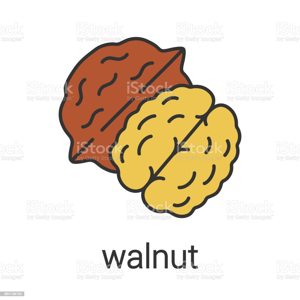 Walnut icon royalty-free walnut icon stock vector art & more images of color image