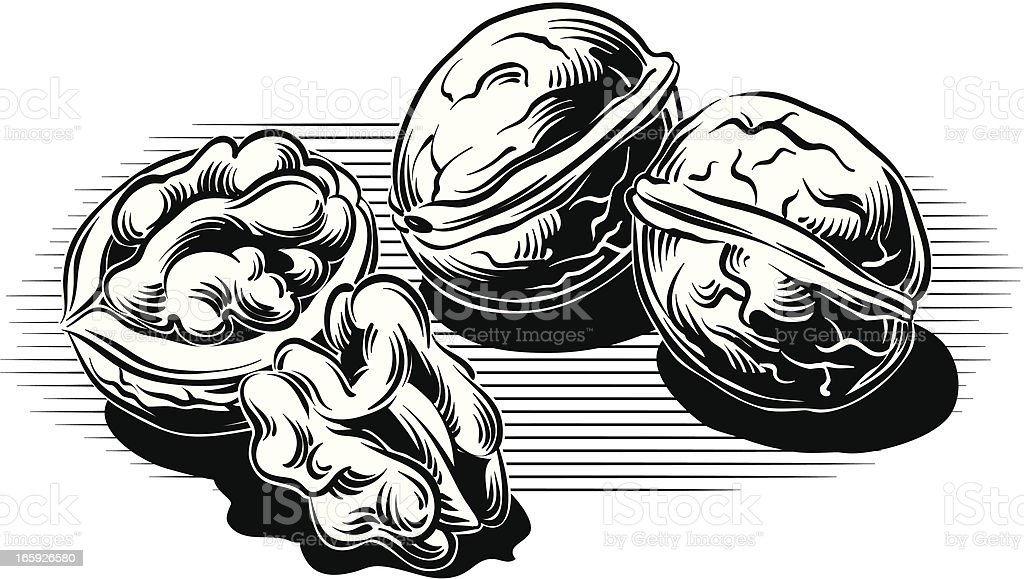 walnuts royalty-free stock vector art