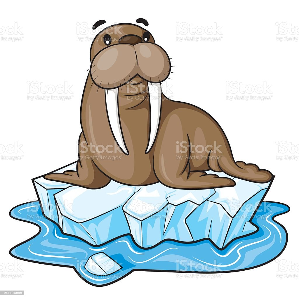royalty free walrus clip art vector images illustrations istock rh istockphoto com walrus face clipart cute walrus clipart