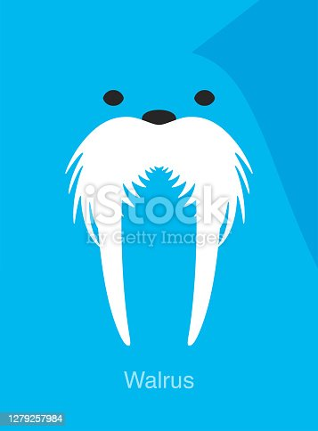 walrus face icon, vector illustration