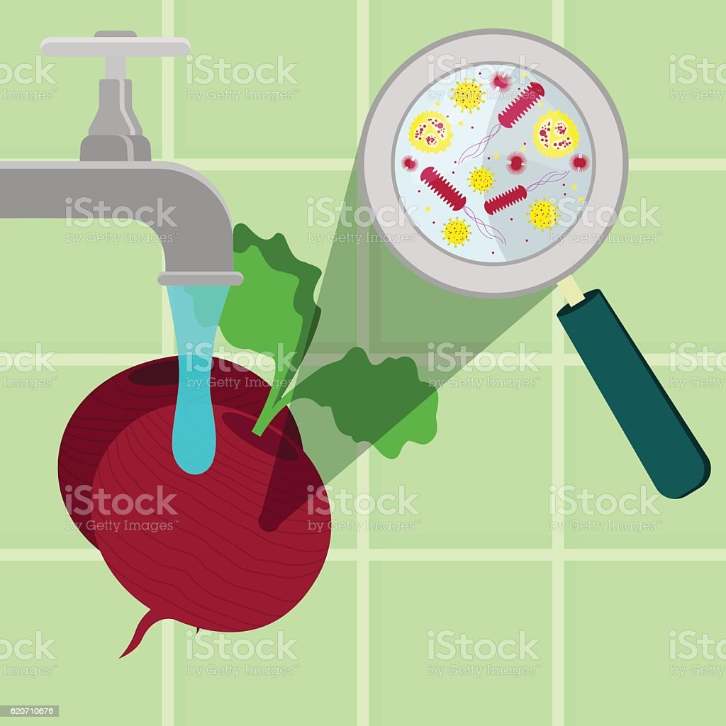 Washing contaminated beet vector art illustration
