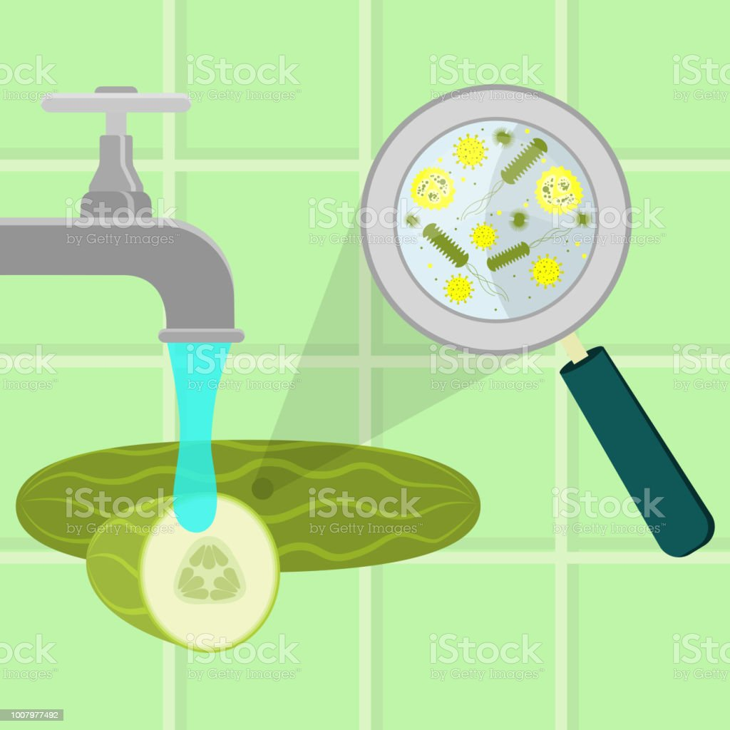 Washing contaminated cucumber vector art illustration
