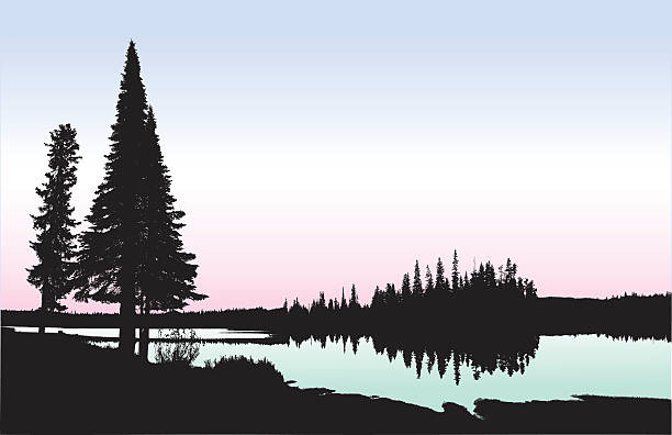 Washington Lakeshore A vector silhouette illustration of a tranquil lake surrounded by pine trees and forest.  The lake is coloured in a light green gradient with a pink and blue sky. lakeshore stock illustrations