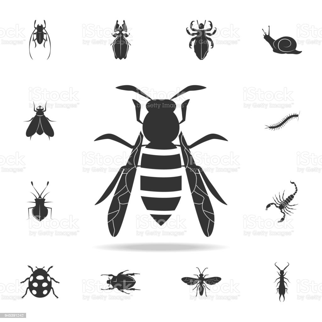 wasp. Detailed set of insects items icons. Premium quality graphic design. One of the collection icons for websites, web design, mobile app vector art illustration